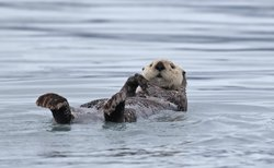 Alaska Saltwater Lodge Small Group Whale Watching, Wildlife & Glacier Tour