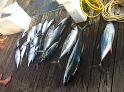 Double Header Sportfishing