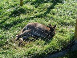 Kiltimagh Pet Farm and Wildlife Park