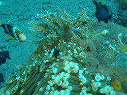 Baruna Dive Center Tulamben