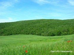 Oasi LIPU - Riserva Naturale Bosco Casale