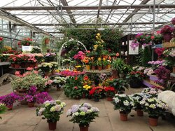 Walker's Nurseries and Garden Centre