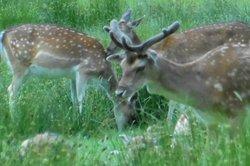 Bolderwood Deer Sanctuary