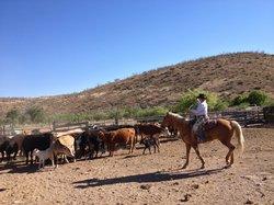 The Dancing Y Ranch