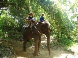 Muang Sing Elephant Village