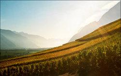 Vin Vigne Voyages - Day Tours