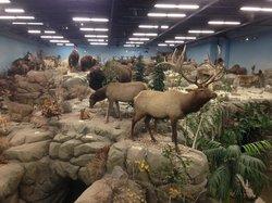 Rosenbruch Wildlife Museum