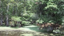 A Cajun Man's Swamp Cruise