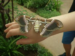 Butterfly Park of Benalmadena