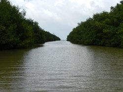 La Paseadora del Río Espíritu Santo