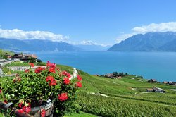 Corniche Lavaux Vineyards