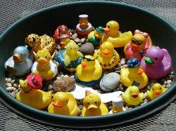 Duck Pit