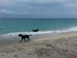 Jupiter Dog Beach