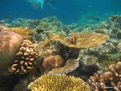 underwaret Biyadhoo reef 2