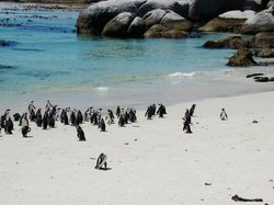 Visit the pristine cove and penguin colony at Boulders Beach