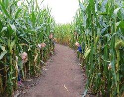 Sauchuk Farm & Corn Maze