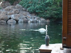 Swans at Son'z