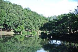 Junsai Pond Area