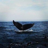 Avistamiento de delfines y ballenas