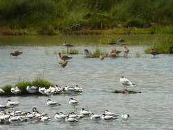 Reserve Naturelle Marais de Sene