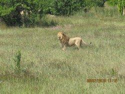 Taigan Lions Park