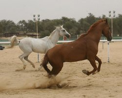 Mushrif Equestrian Club