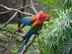 Zoologico de Caricuao