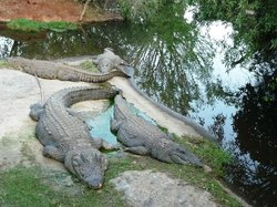 Kwena Crocodile Farm