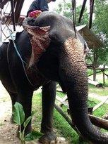 discovery elephant tour (72380839)
