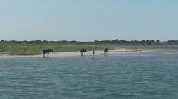 Assateague Adventure-Day Tours
