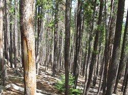 Upper Beaver Meadows Trailhead