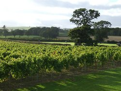 Kerry Vale Vineyard