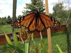 Butterfly Gardens of Wisconsin