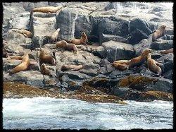 Gods Pocket Marine Provincial Park