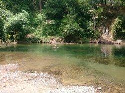 Jungle river swim