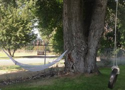 Hammock and Tire Swing Under Large Shade Tree