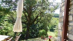 Albero della veranda