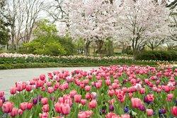 Dallas Arboretum & Botanisk Have
