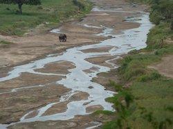 One lone elephant
