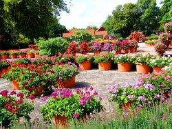 Ega Cyriaksburg Erfurt (Erfurter Garten)
