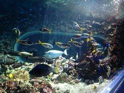 Akvariet i Bergen