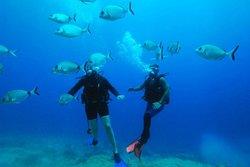 Aqua Deep Dive