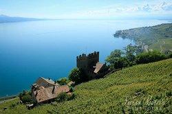 瑞士海滨红酒之旅
