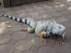 Nakhon Ratchasima Zoo
