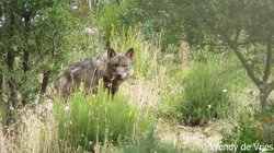 Iberian Wolf Recovery Centre