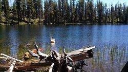 Caribou Wilderness