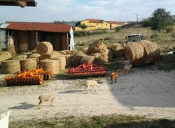 AGRITURISMO MARTONE
