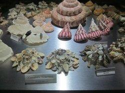 深海贝壳世界