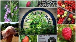 Hendrewennol Fruit Garden