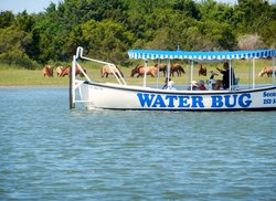 Waterbug Tours